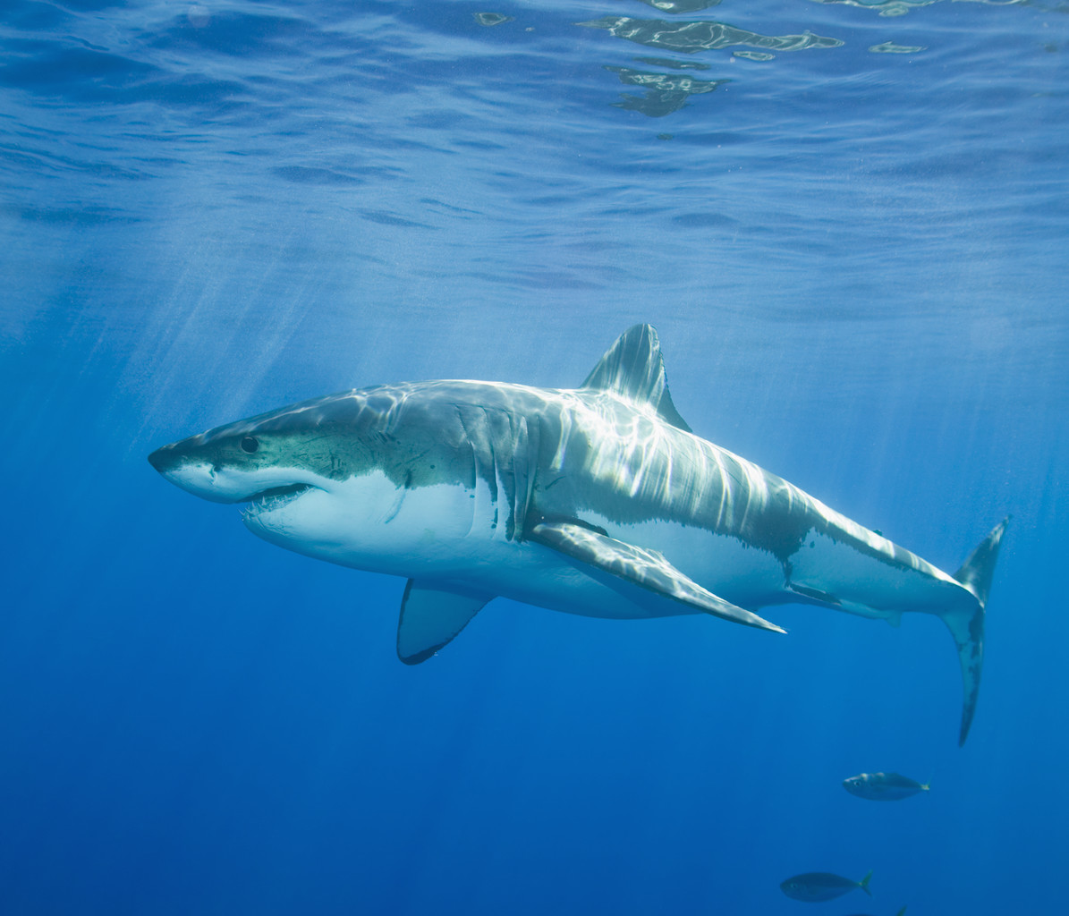 Seven Lessons From the Shark Tank
