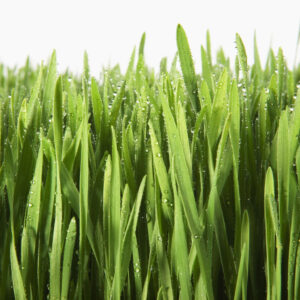 Career Planning: The Grass Isn't Always Greener