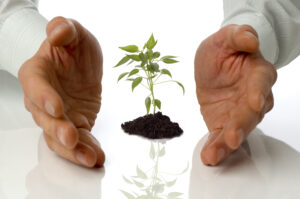 Five Key Things for Small Business Growth