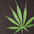 The Legalization of Marijuana and its Impact on the Workplace